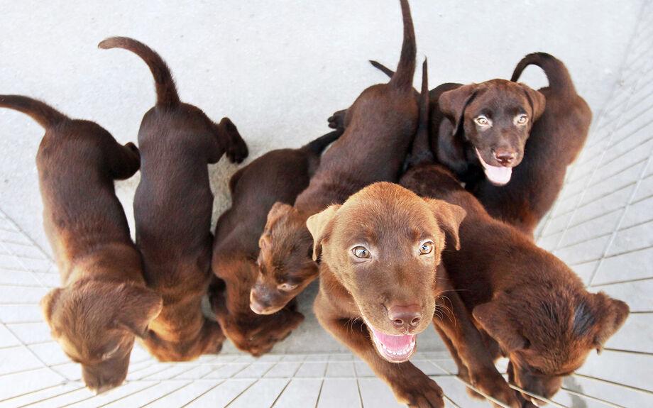 A lei também veda a venda de animais domésticos de pequeno porte: cães e gatos nas vias de circulação ou em qualquer ambiente público fora de estabelecimento comercial