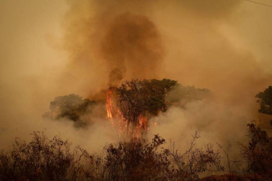 Pantanal enfrenta a maior série de queimadas das últimas duas décadas, segundo dados do Instituto Nacional de Pesquisas Espaciais (Inpe)