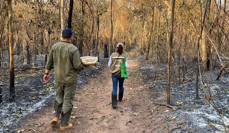 O Governo do Estado está apoiando o levantamento do impacto dos incêndios na biodiversidade visando programas de restauração