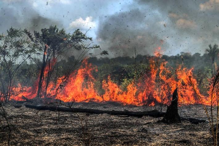 Operação Focus vistoria propriedades no Pantanal da Nhecolândia e Nabileque para identificar origem das queimadas