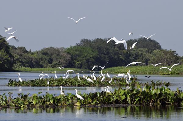 Resultado de imagem para Empresa referência em saneamento adere ao 'Pacto em Defesa das Cabeceiras do Pantanal'